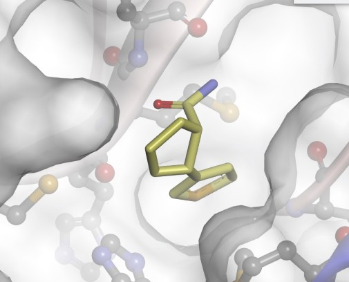 Compounds synthesised in York could provide clue in the hunt for new treatments against COVID-19