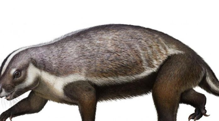 'Crazy beast' lived among last of dinosaurs, says new research