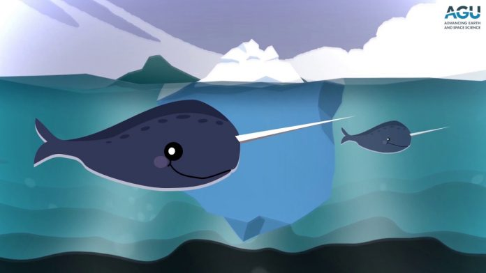 Report: Rarely heard narwhal vocalizations