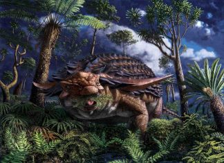 Armored dinosaur's last meal preserved in stunning detail, Researchers Say