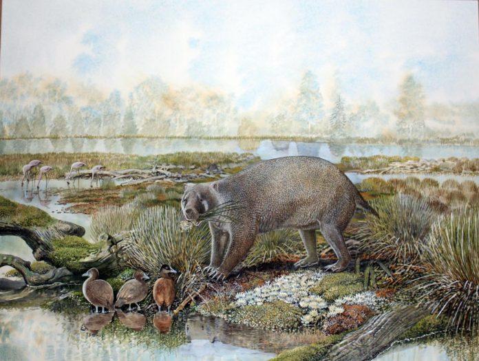 New extinct family of giant wombat relatives discovered in Australian desert