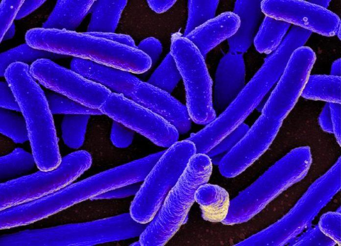 Report: A dual-mechanism antibiotic kills Gram-negative bacteria and avoids drug resistance