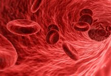 Report: Synthetic red blood cells mimic natural ones, and have new abilities