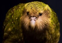 Study highlights which endangered species should be prioritized for conservation