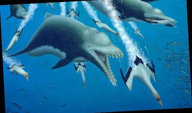 Giant ancient dolphin feasted on killer whales, Researchers Say