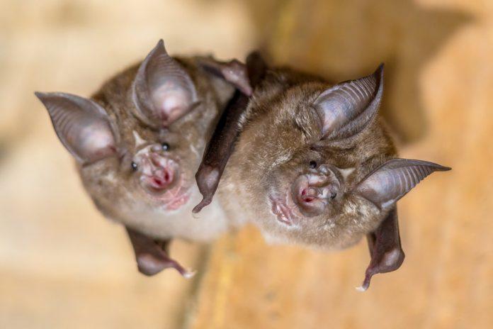 Scientists identify evolutionary origins of SARS-CoV-2