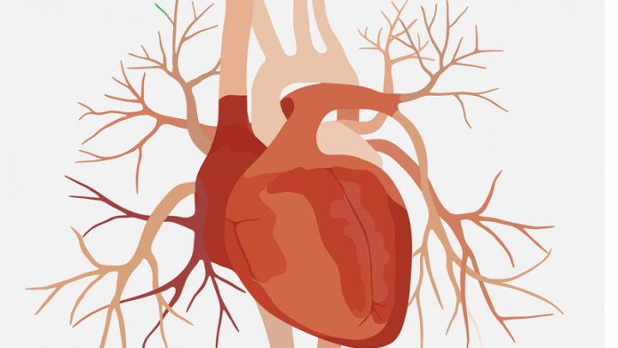 Study: Cholesterol-Lowering Drug Improved Function of Heart's Arteries
