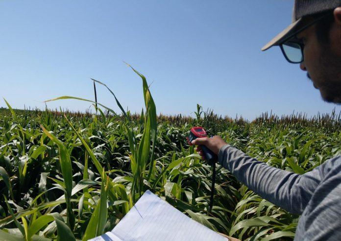 Water-saving alternative forage crops for Texas livestock