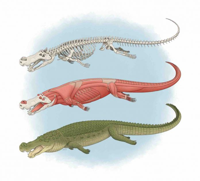 Ancient 'terror crocodiles' lived 82 million years ago, says new research