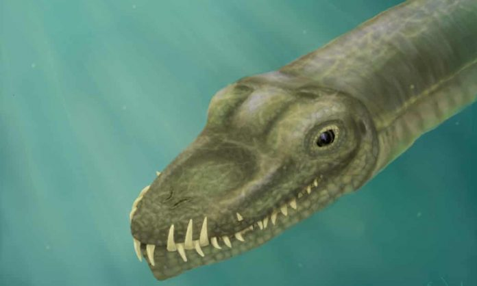 Researchers follow the nose to solve mystery of long-necked reptile