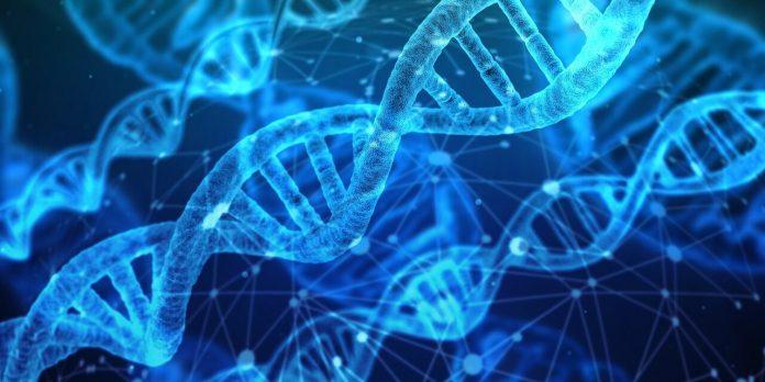 Study: Bioluminescent tag to detect DNA break repair