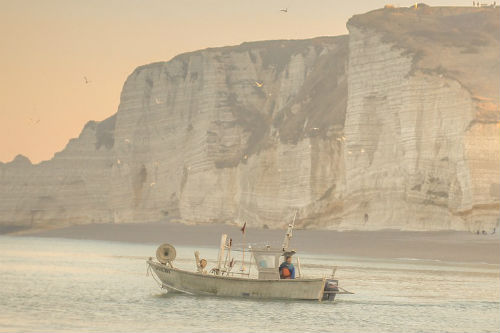 Study: How fish stocks will change in warming seas