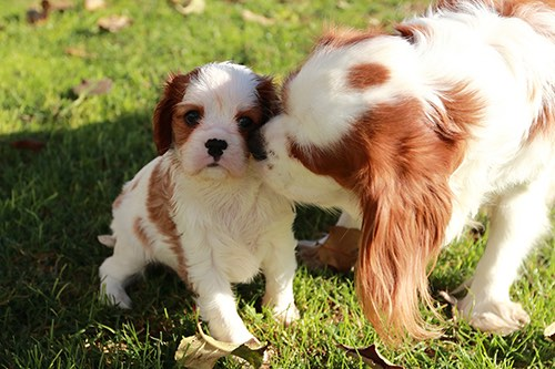 Study: One in four puppies 'separated from their mother too soon'