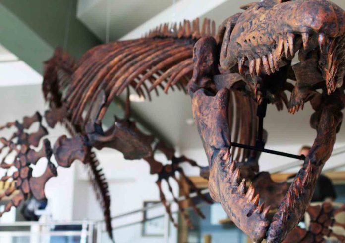 Study: Paleontologist Describes New Genus of Mosasaurs - Gnathomortis
