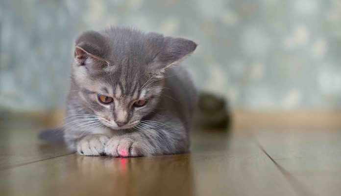 """Study: Pet laser pointers have enough power to """"blast away"""" cells in the back of the eye"""