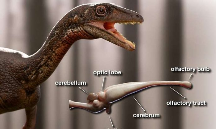 Buriolestes schultzi: Scientists reconstruct the first complete brain of one of the oldest dinosaurs
