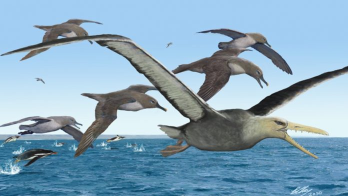 Scientists Discover Earliest Fossils Of Giant-Sized Bony-Toothed Bird In Old Collection