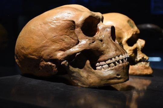 Neanderthals Had Capacity to Produce Human-Like Speech, Says New Study