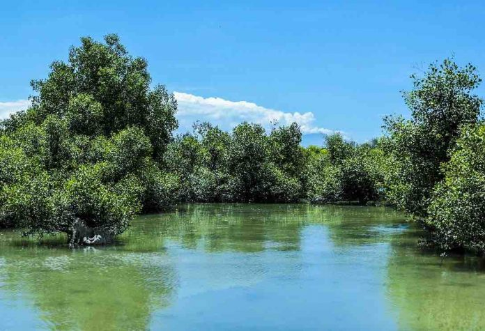 Research: Carbon stockpiles abound in mangrove sinkholes