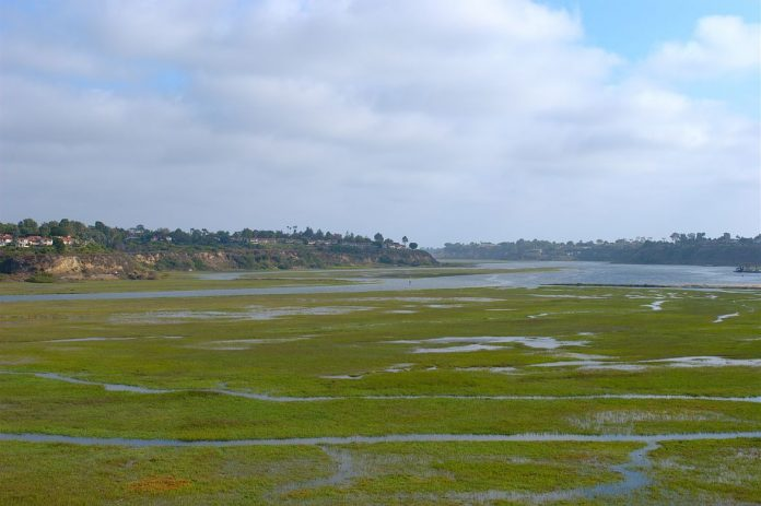 Research: Human wastewater is feeding harmful algae blooms off of Southern California's coast