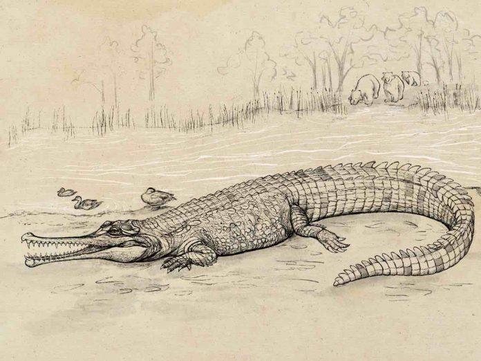 Research: Huge prehistoric croc 'river boss' prowled SEQ waterways