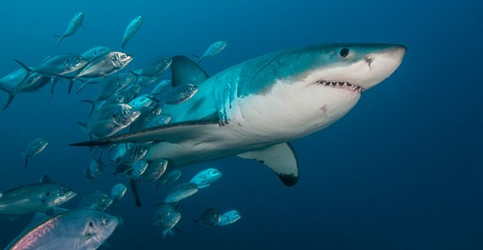 Research: Mysterious Ancient Event Nearly Wiped Out Sharks