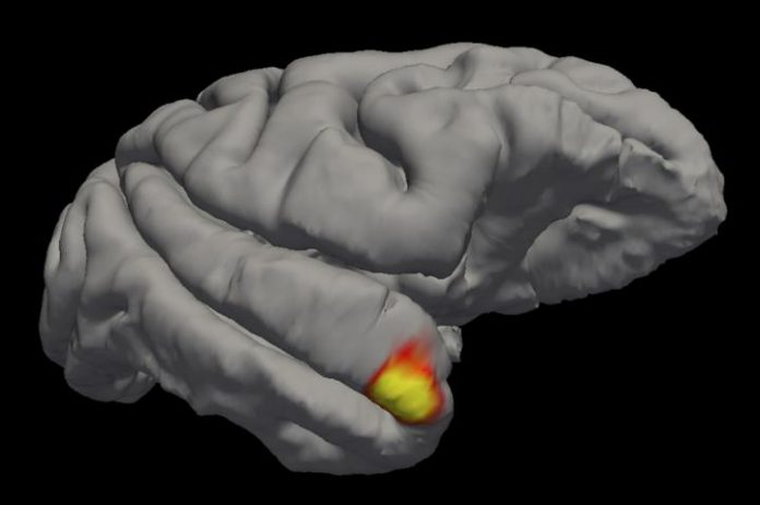 Researchers discover a new class of memory cells in the brain