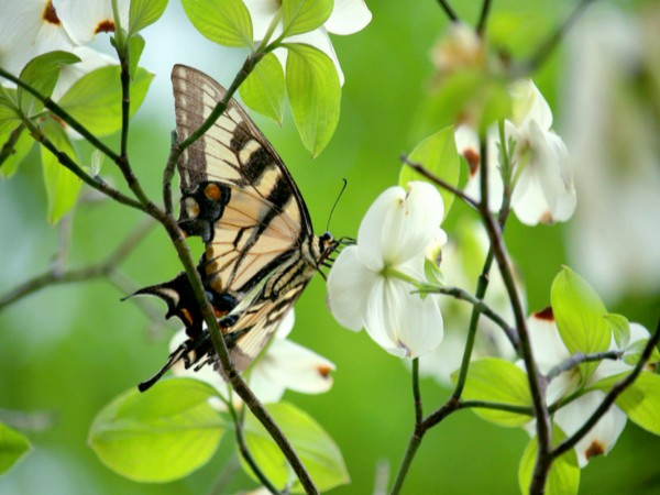 Pollinators: The first global risk index for species declines and effects on humanity (Study)