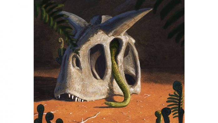 Research: Asteroid that wiped out dinosaurs shaped fortunes of snakes