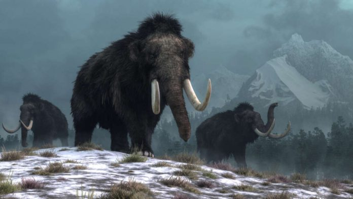 Researchers Plan to Resurrect the Woolly Mammoth This Decade