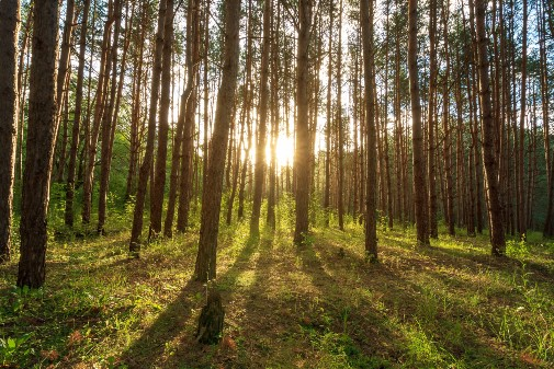Research finds nature-based activities can improve mood, reduce anxiety