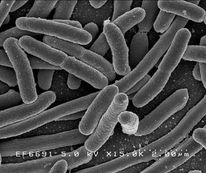 Trait refinement role in evolution discovered in bacteria study